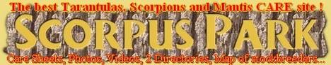 scorpuspark-80voezhk0shnoosdcop3.jpg