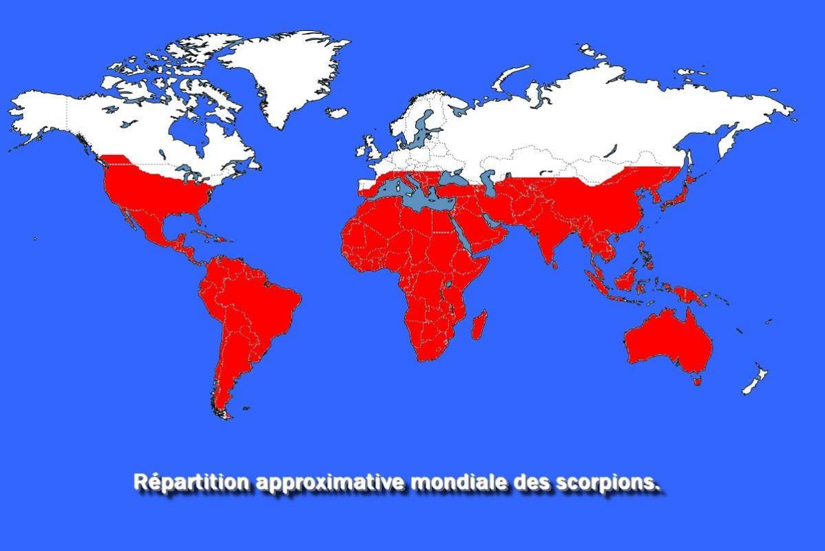 Repatition des scorpions dans le monde